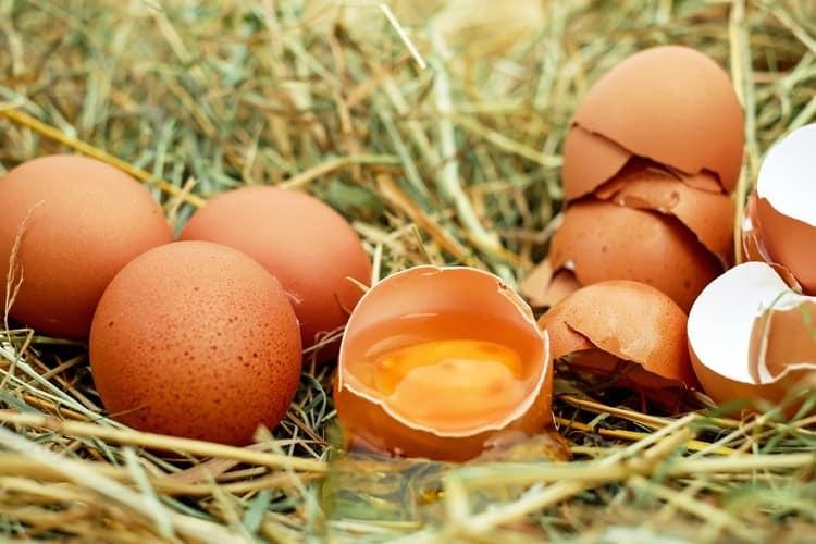 causes of high estrogen levels eggs