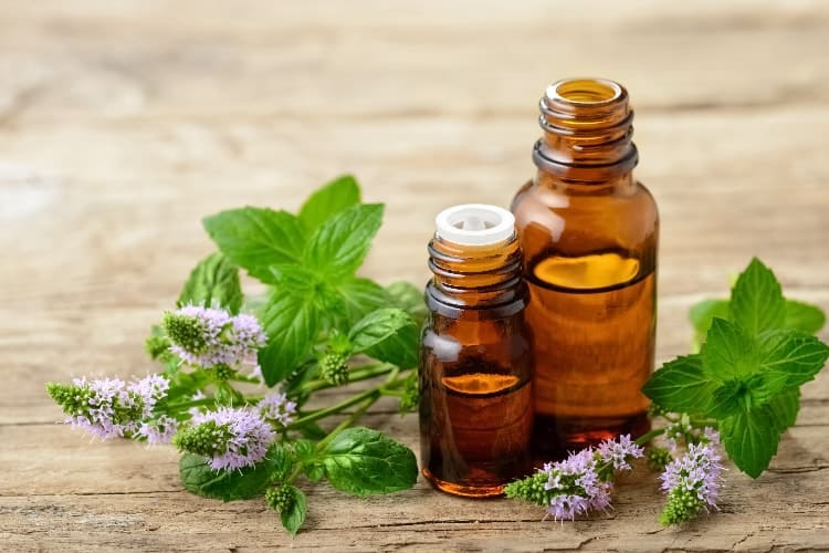 bottles of peppermint oil and fresh mint