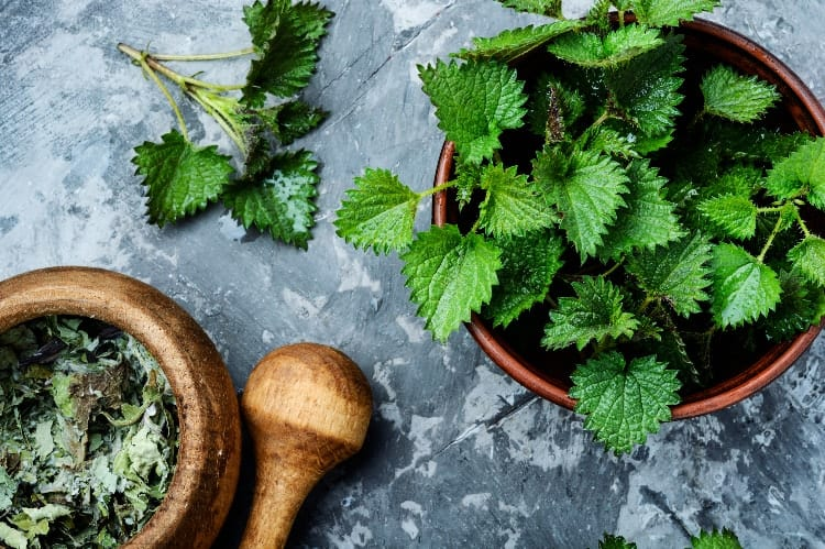 The Benefits of Nettle for Hormones and The #1 Way To Use It