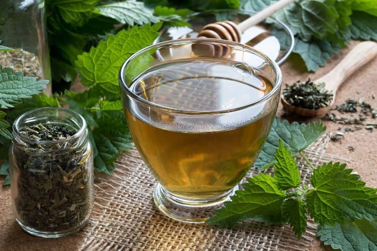 nettle tea for hormone balance