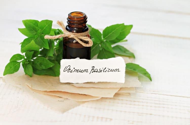 basil oil for menstrual cramps