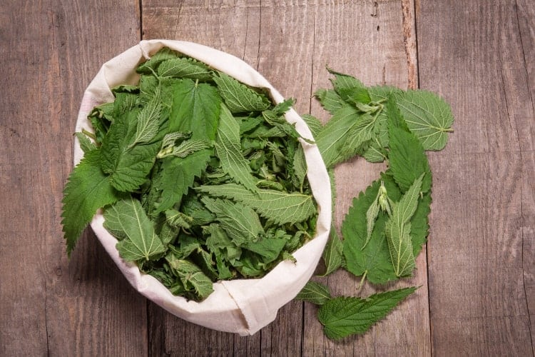 herbs that help with excessive menstrual flow stinging nettle