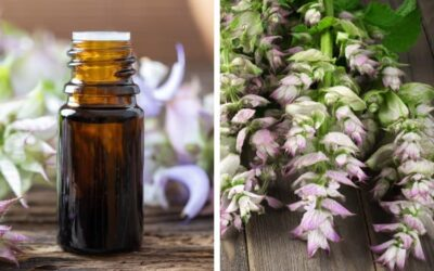 How to Use Clary Sage Oil for Hormone Balance